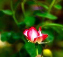 Rosebud II by Wendy Mogul