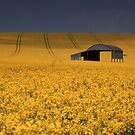 Barn and rape field by jephoto