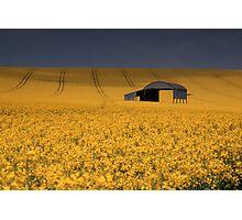 Barn and rape field Photographic Print