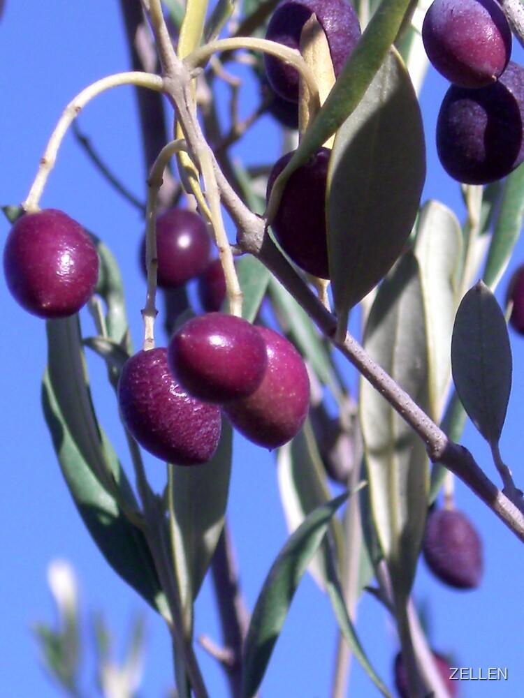 olives 2 by ZELLEN