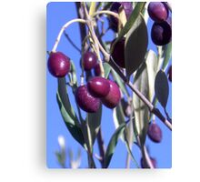olives 2 Canvas Print