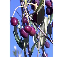 olives 2 Photographic Print
