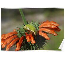 Green Beetle on Orange Flower Poster