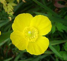 Flower by Bombshell