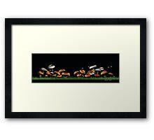 Fungi901 Framed Print