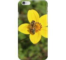 Honey Bee on Yellow Flower iPhone Case/Skin