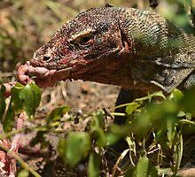 Komodo dragon by Milonk