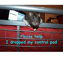 gamer rat Photographic Print