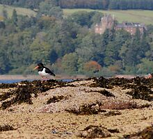Brodick Birds by Richard Ion