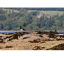 Brodick Birds Photographic Print