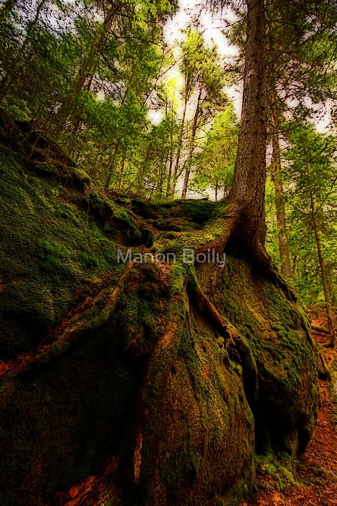 tree roots by Manon Boily