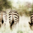 Zebras on Parade by David  MacCallum-Price