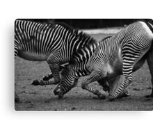 The Fight Canvas Print