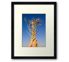 Ripe wheat stalks on a blue sky background  Framed Print