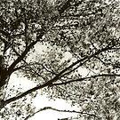 Tree by salwa