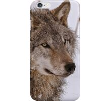 Timber Wolf Portrait  iPhone Case/Skin