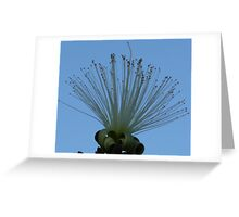 Reaching... Greeting Card