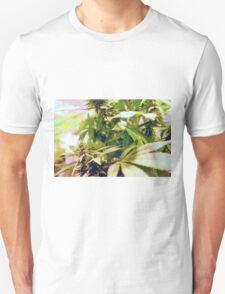 Skunk marijuana plants (Cannabis sativa) being grown in pots T-Shirt