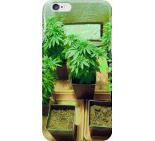 Home Grown Cannabis plants.  iPhone Case/Skin