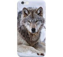Timberwolf in Winter iPhone Case/Skin