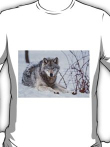 Timberwolf in Winter T-Shirt