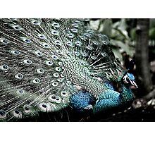 shining sapphires... Photographic Print