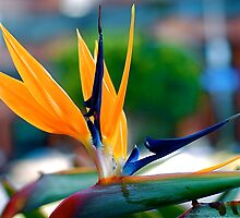 Bird of Paradise by Julie Marks
