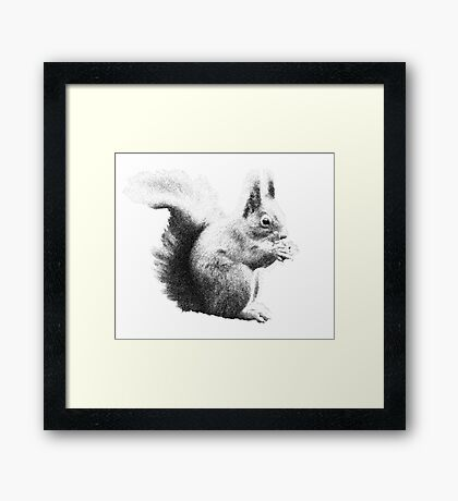 Squirrel black and white Framed Print