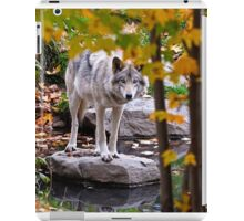 Timber Wolf by Pond iPad Case/Skin