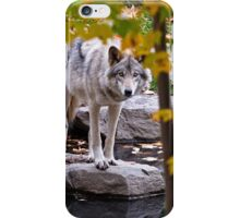Timber Wolf by Pond iPhone Case/Skin