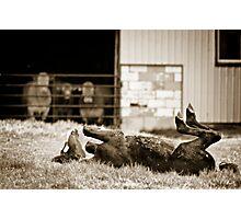 dumb horse Photographic Print