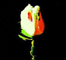 The Swan Rose by James Stevens