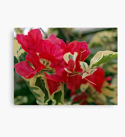 Red Paper Flowers Canvas Print
