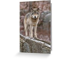Timber Wolf on Rocks Greeting Card
