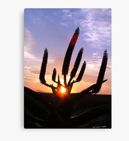 Aloe Aurora Canvas Print