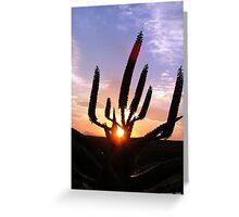 Aloe Aurora Greeting Card
