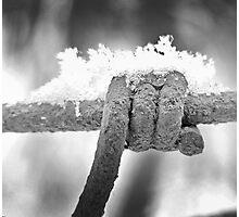 Snowy Barb Photographic Print