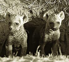 Young Pups by David  MacCallum-Price