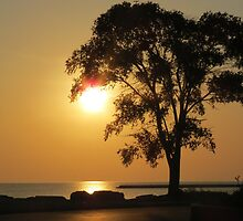 Golden Morning by kkphoto1