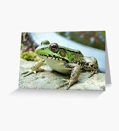 sillyfrog Greeting Card