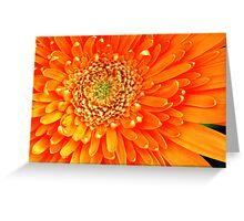 orange radiance Greeting Card