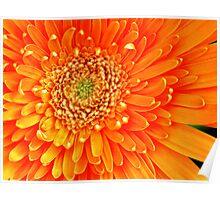 orange radiance Poster