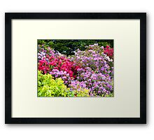 Reds and Pinks Framed Print