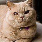 Archie the aristocat by Steve plowman