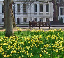 More Daffs by Hertsman