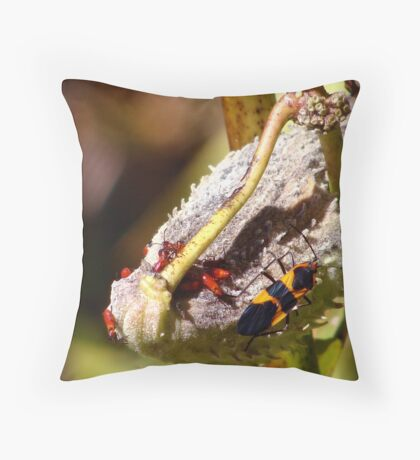 Box Elder Bugs Throw Pillow