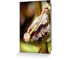 Box Elder Bugs Greeting Card