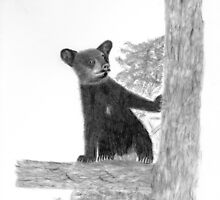 Bear Cub in tree by Darrell Ibach