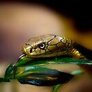 King Cobra by Cheri  McEachin