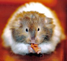 hamster by abaustin1